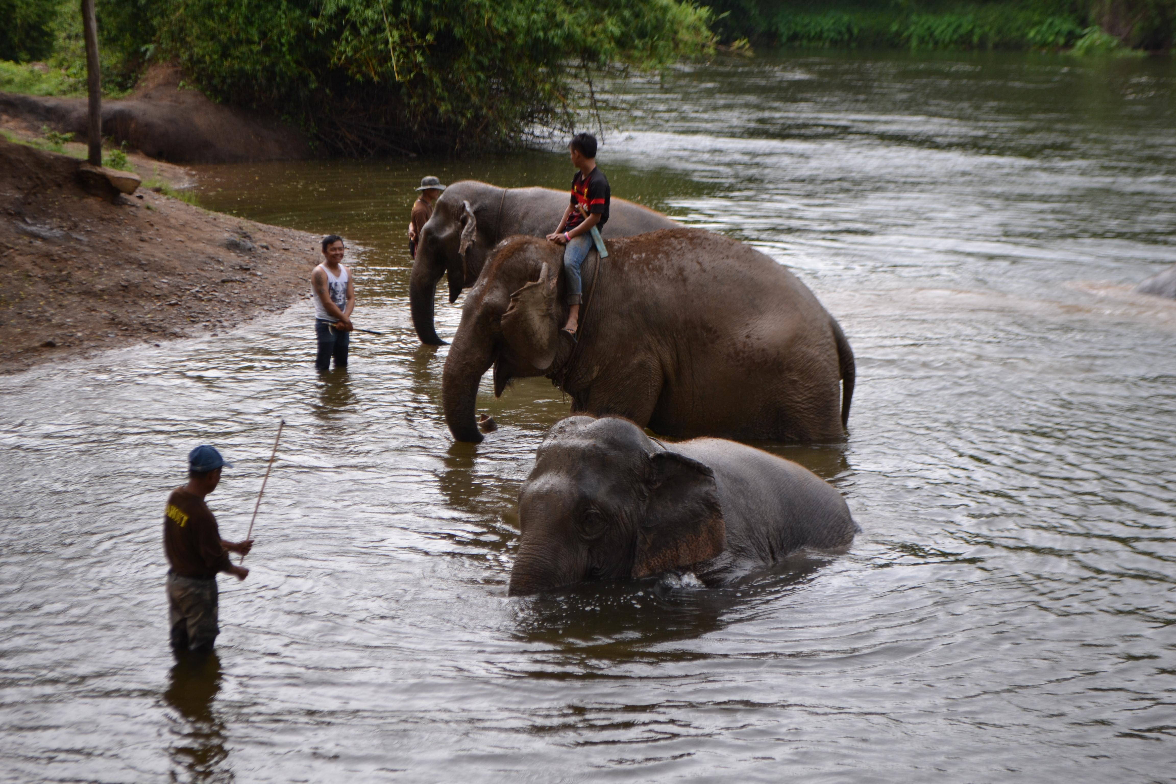 Voir des éléphants en Thaïlande